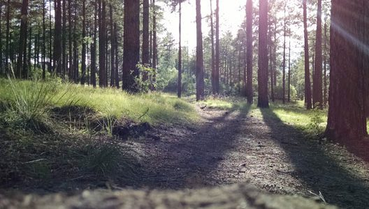 Our courses - photo of woodland